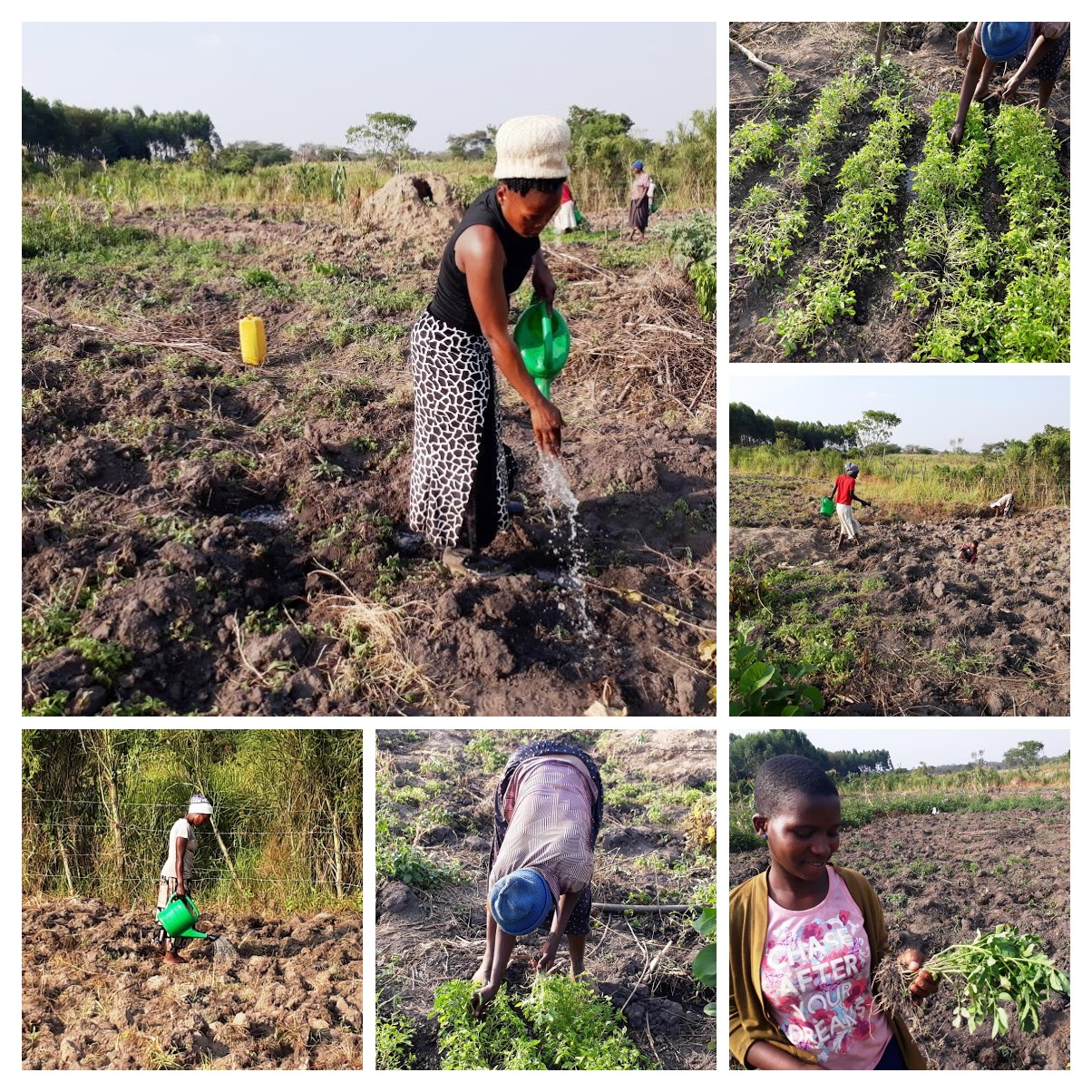 Tomato Project
