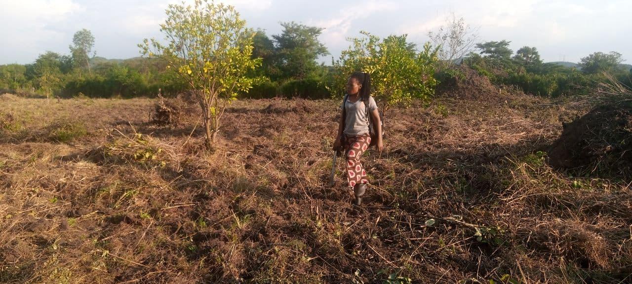 Farm land prepared