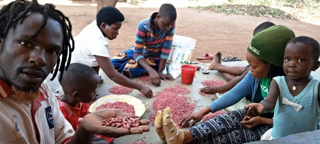 Selecting beans for planting