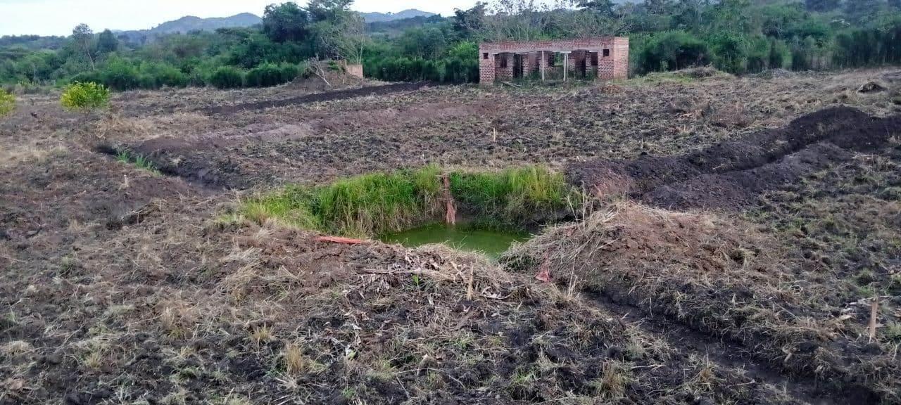 Organic farm planted
