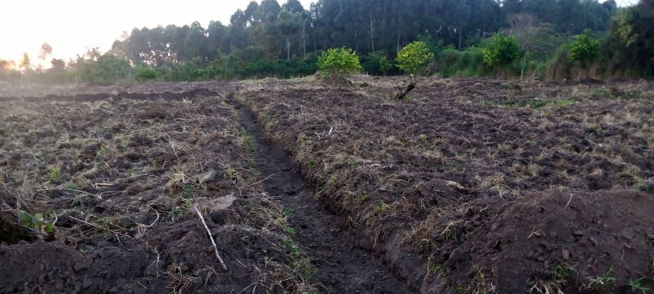 Farm terraces to prevent flooding